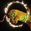 Цирки в Курчатове