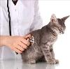 Ветеринарные клиники в Курчатове